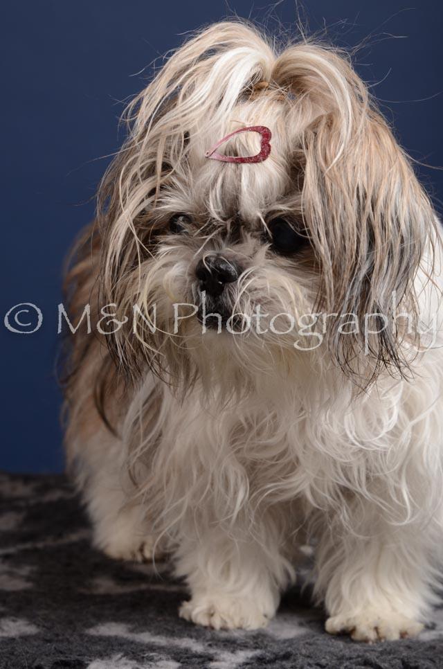 M&N Photography -DSC_4374