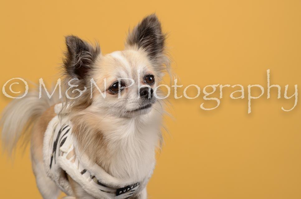 M&N Photography -DSC_4766