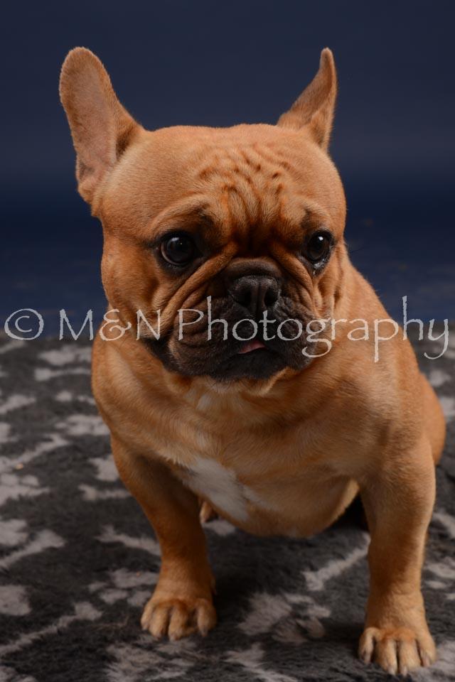 M&N Photography -DSC_0606