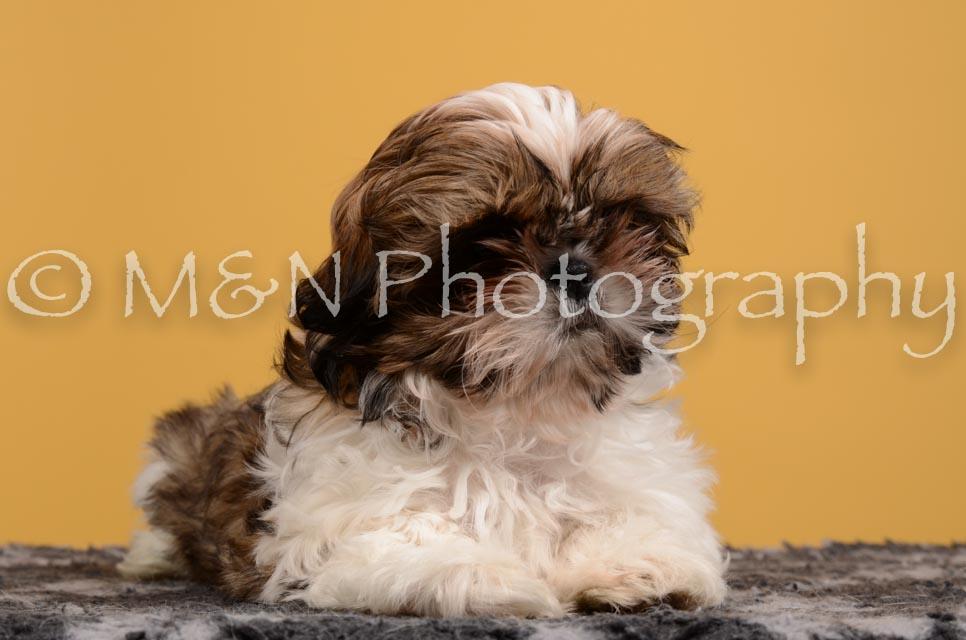 M&N Photography -DSC_4553