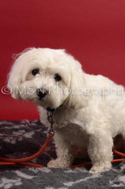 M&N Photography -DSC_8642