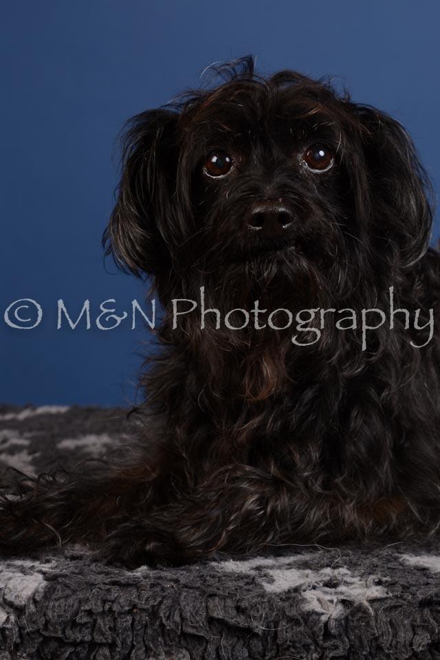 M&N Photography -DSC_5000