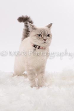 M&N Photography -DSC_8810
