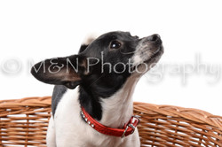 M&N Photography -DSC_8868