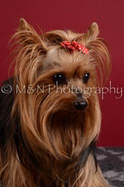 M&N Photography -DSC_3625