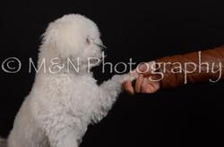 M&N Photography -DSC_5603