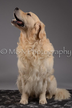 M&N Photography -DSC_1574