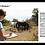 Thumbnail: Les capacités cognitives du cheval