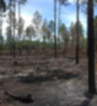 20140902 Gate 42 Wildfire.jpg