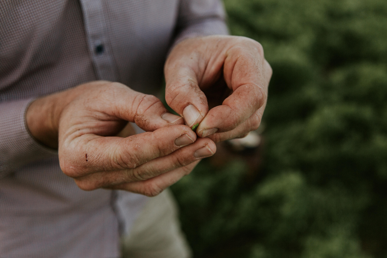 Checking the lentil pods