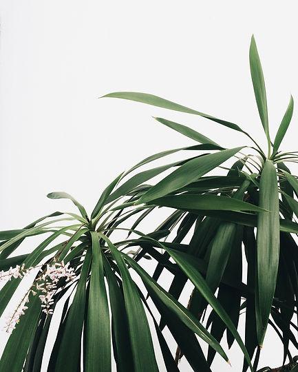 Green%20Plants_edited.jpg