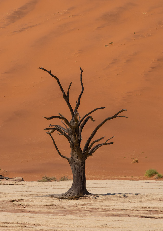 tote Bäume im Deadvlei (Namibia)