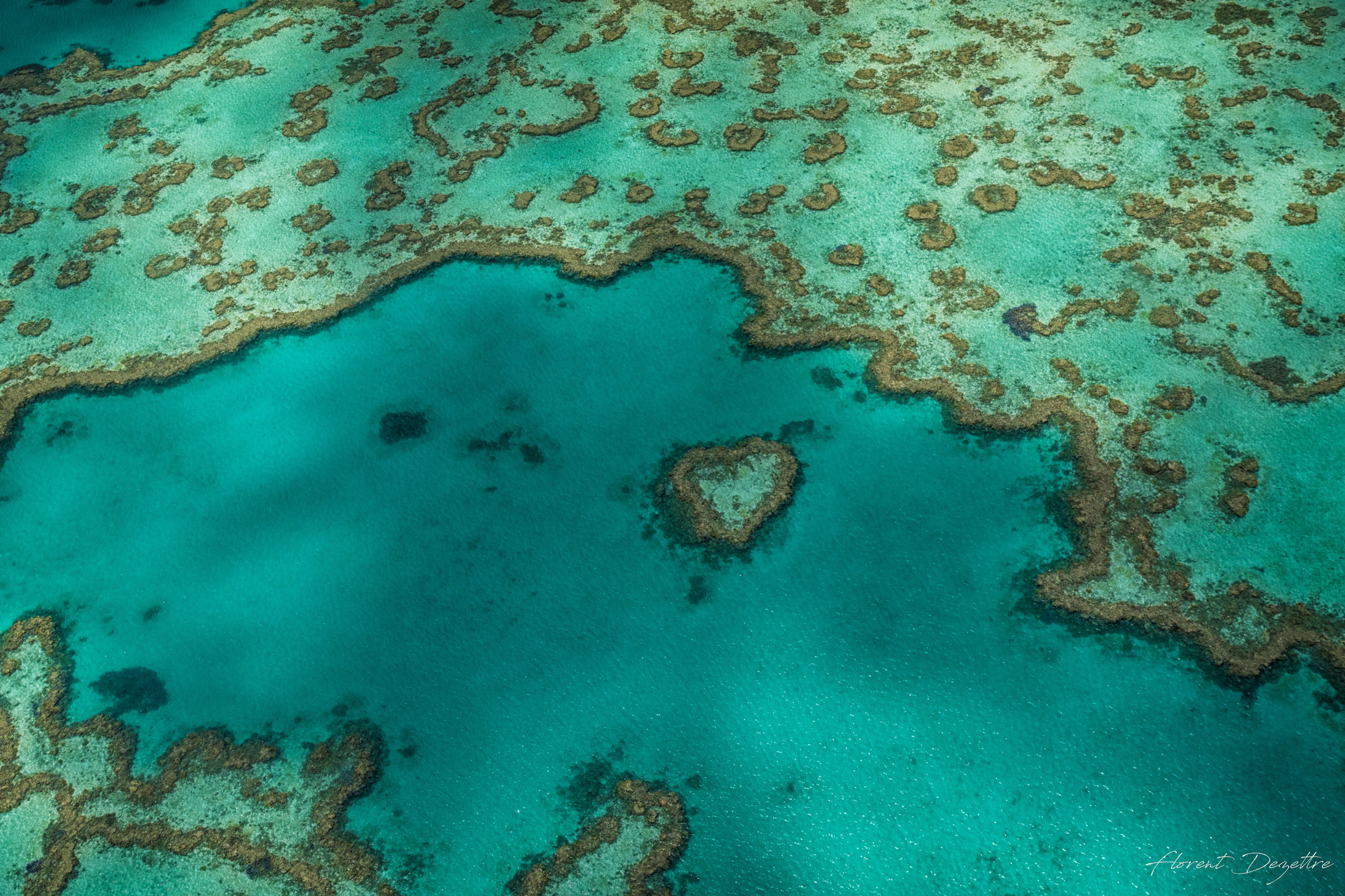 In-The-Heart-Of-The-Reef
