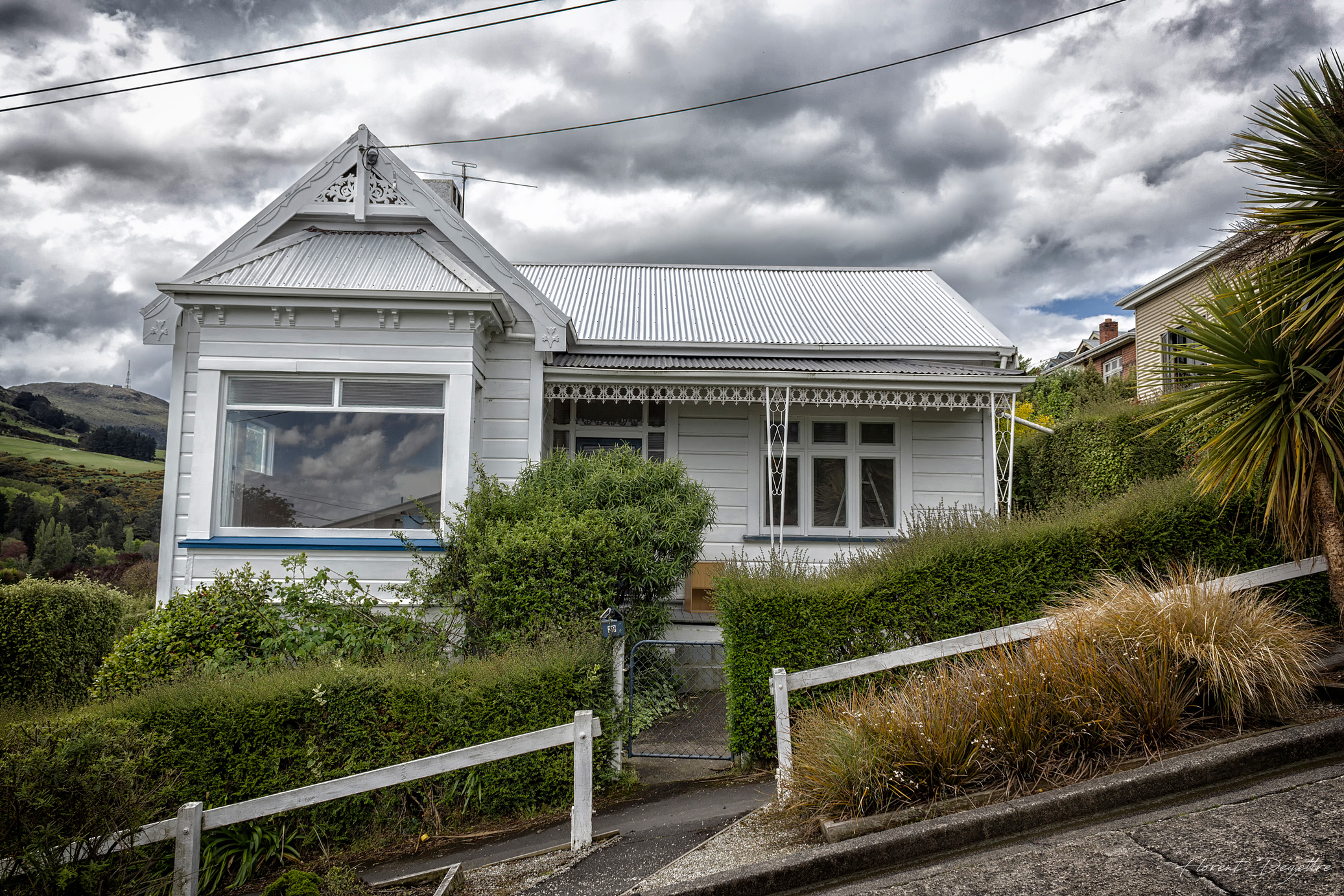 NZ_7991
