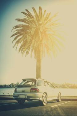 Summer-Wagon-Plam-Tree