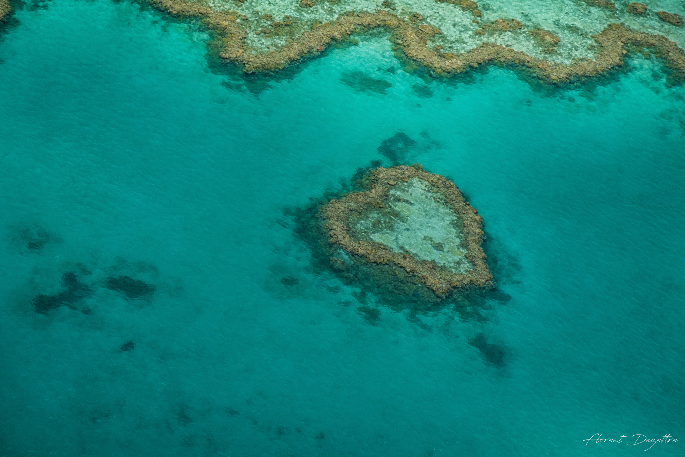 Heart-Of-The-Reef
