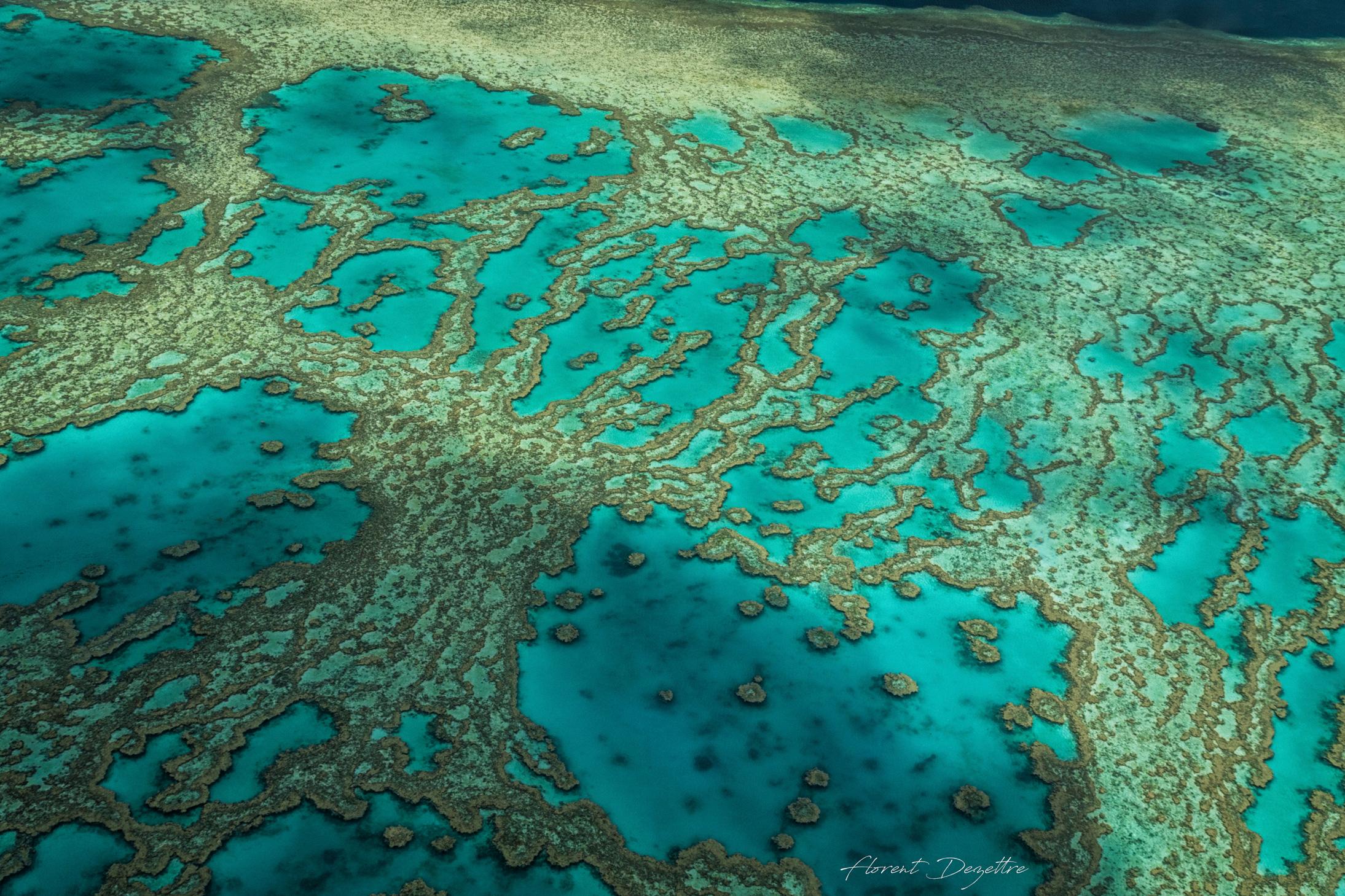 Reef-Pattern