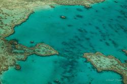Reef-Link