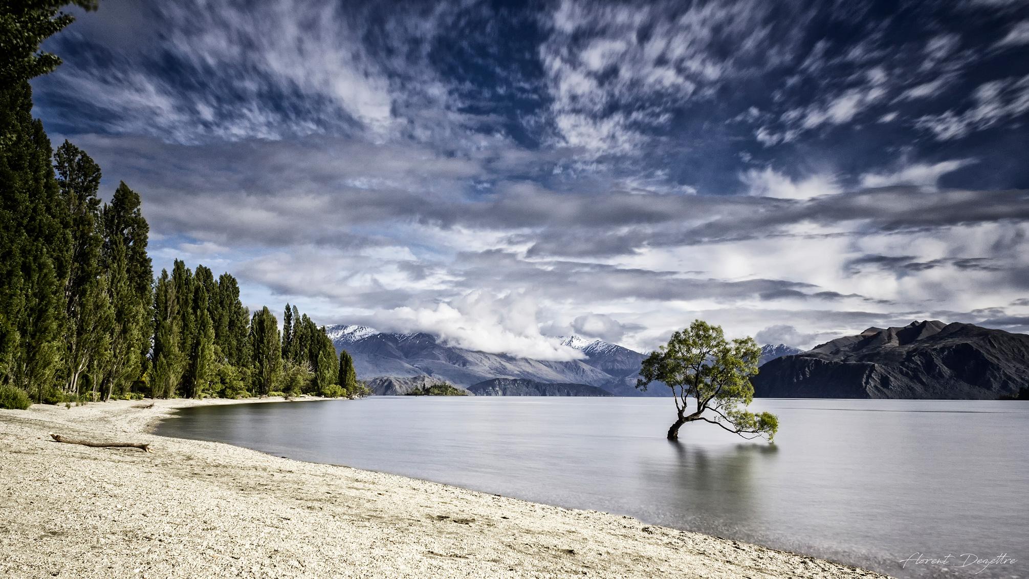NZ_8491