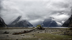 NZ_8245