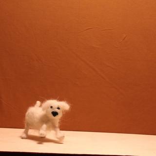 Dog.mp4