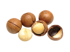 huile-vegetale-macadamia-bio-100-ml-terr