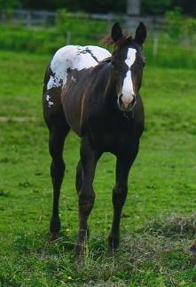 foal003