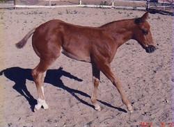 foal032