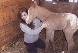 foal005
