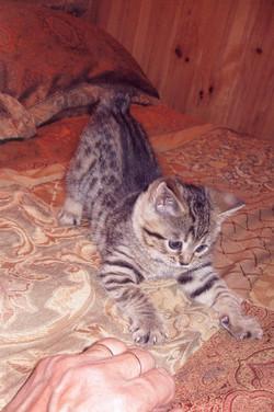 AChristmas_Cat_1