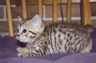 cat011