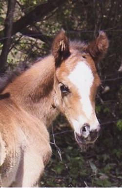 foal002