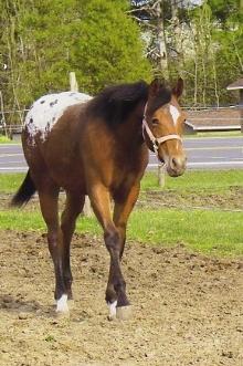 foal014