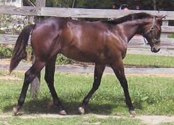 foal013