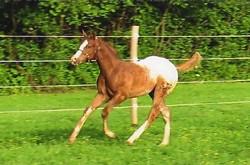 foal031