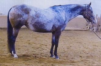 mare pardon my principle001