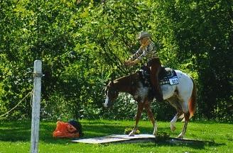 foal012