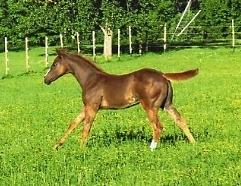 foal016