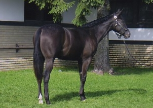 foal010