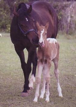 foal004