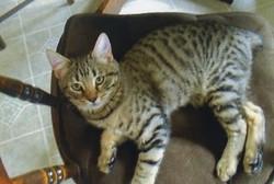 cat002