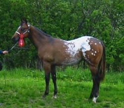 foal006