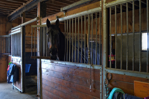 Wroxie's Stall