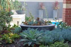 Pool & Waterwise Garden Design Perth