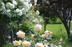 Garden Design & Landscaping Dalkeith