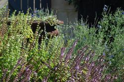 Beautiful City Garden Designs Perth