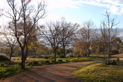 Laurelville Manor Landscape Design
