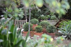 Garden Design Cottesloe Perth