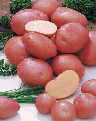 Pomme de Terre Rouge /Sud-Ouest 1kg
