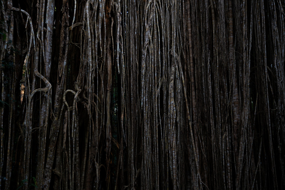 Curtain, 2016